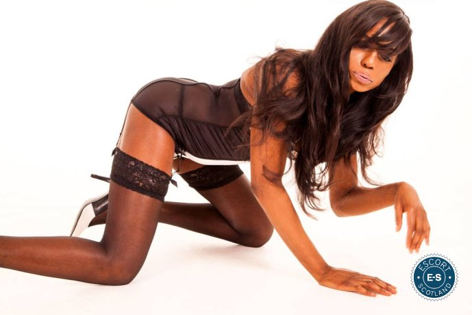 TS Layla is a sexy British escort in Falkirk Town, Falkirk